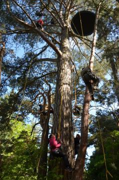 Grimpe dans les arbres - APPN et EE