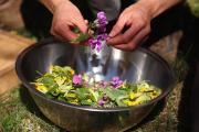 Salade sauvage printanière